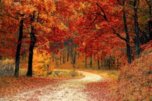 A path is set between trees with leaves turned a golden orange and red in the fall.